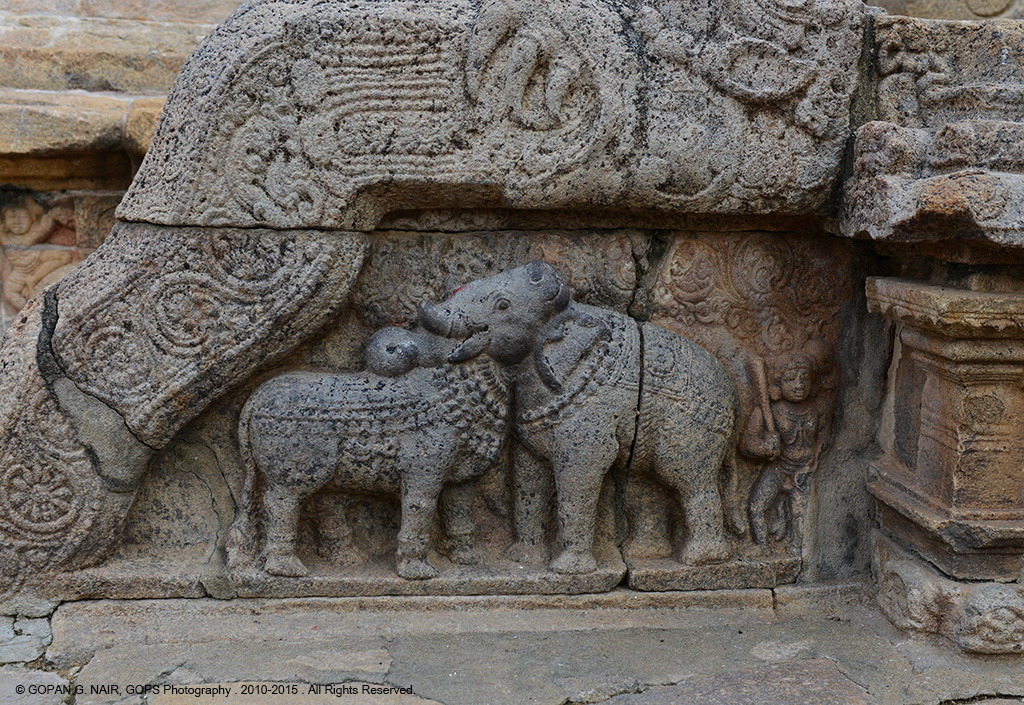 CARVING OF BULL AND ELEPHANT ILLUSION ON THE SIDE WALLS OF AIRAVATESVARA TEMPLE AT DARASURAM