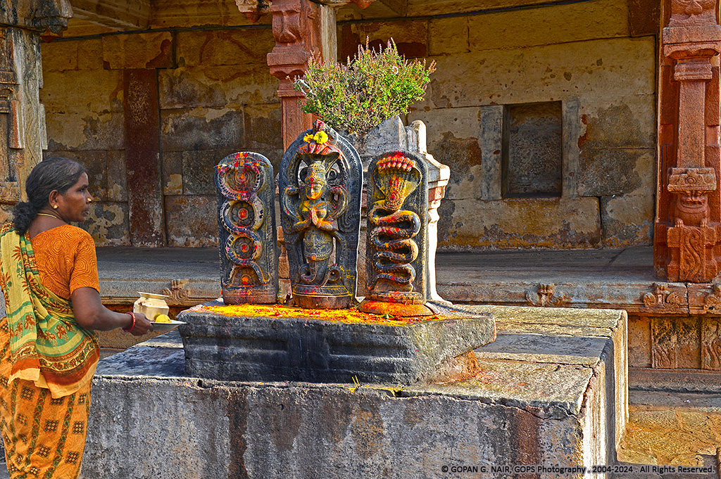 TYPICAL NAGA (SNAKE) WORSHIP IN INDIAN HINDU TEMPLES