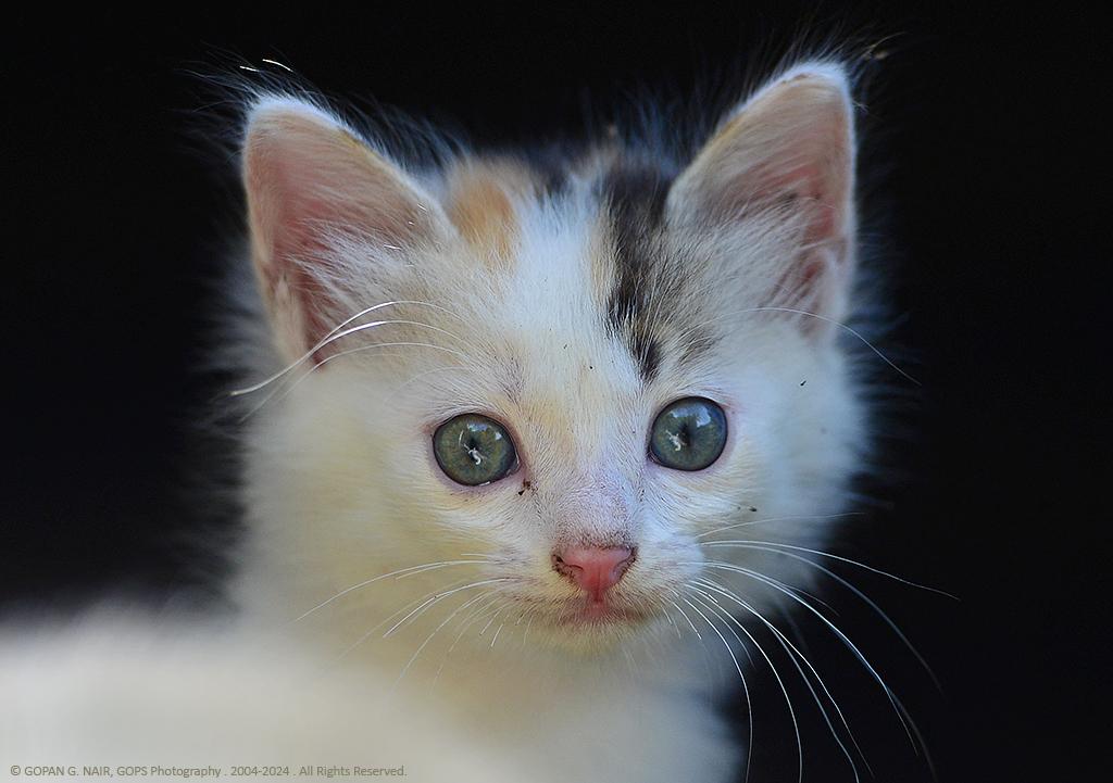kitten03_1024