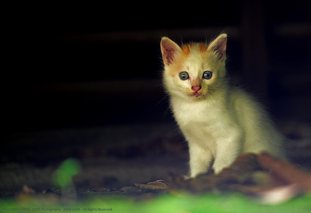 kitten04_1024