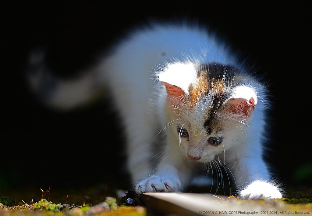 kitten05_1024