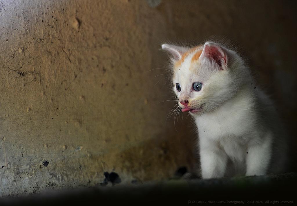kitten06_1024