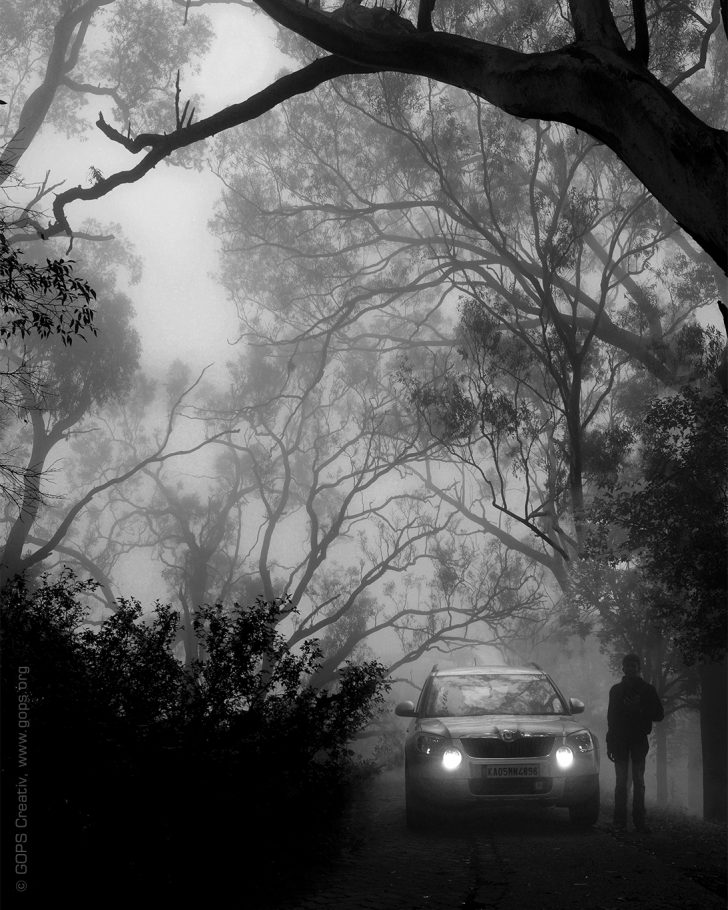 HIDE AND SEEK IN THE MISTY LAND